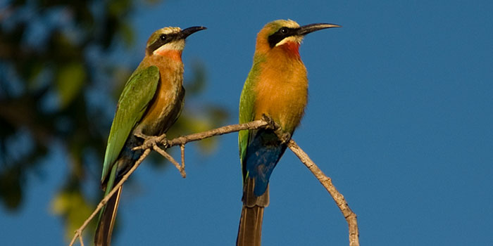 Birds in Kafue National Park