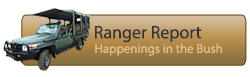 Read our Rangers Report